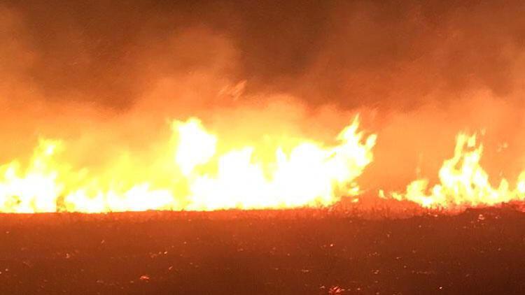 Avşa Adası'nda korkutan yangın!