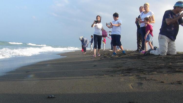 Samandağ'da yavru kaplumbağaların denize yolculuğu başladı