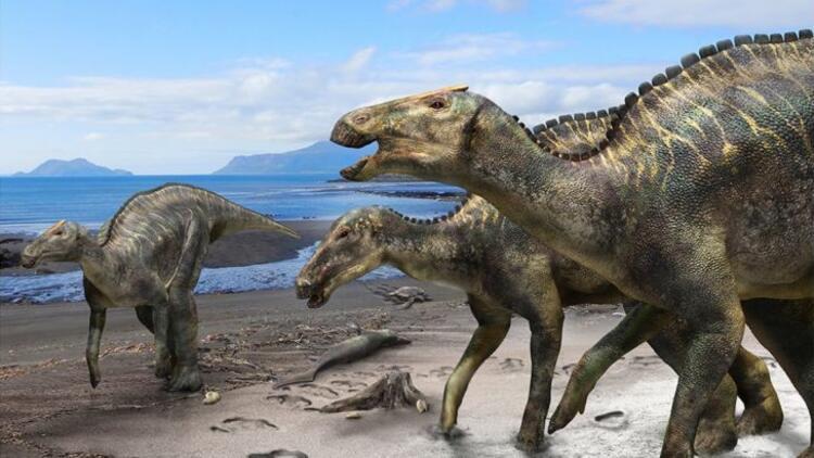 Japonya'da yeni bir tür dinozor fosili bulundu