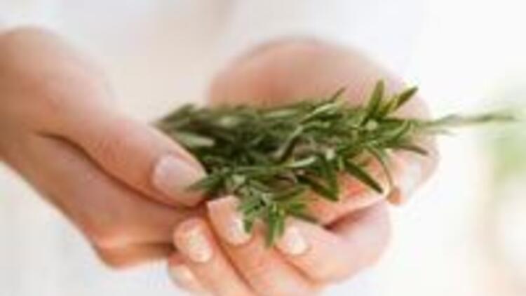 Şifalı bitkilerin doğru kullanım rehberi