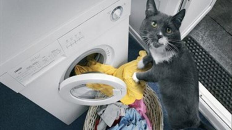 Kedi eğitimi nasıl olmalı?