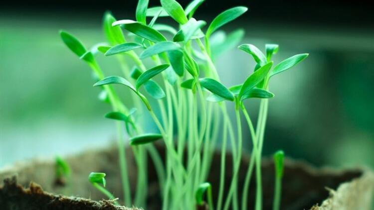 8 Kolay Tohum Çimlendirme Önerisi