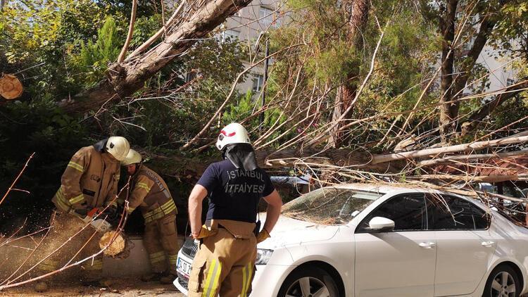 Kadıköy'de ağaç aracın üzerine devrildi