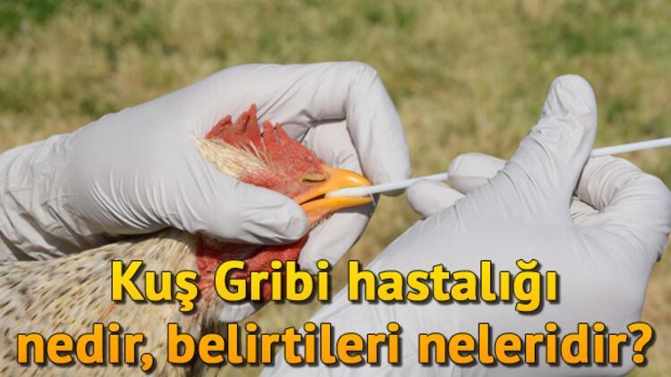Avian İnfluenza (Kuş Gribi) hastalığı nedir, belirtileri nelerdir?