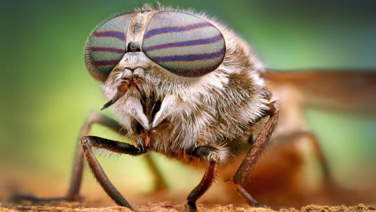 Sivrisineklerin genleri değişirse üremeleri durdurulabilir mi?