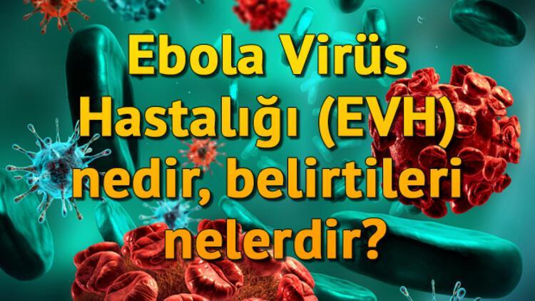 Ebola Virüs Hastalığı (EVH) nedir, belirtileri nelerdir?