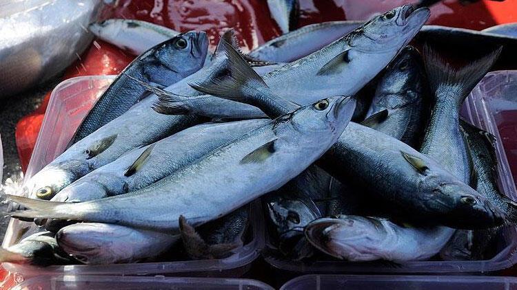 Denizlerin prensi Lüfer 130 liradan satılıyor