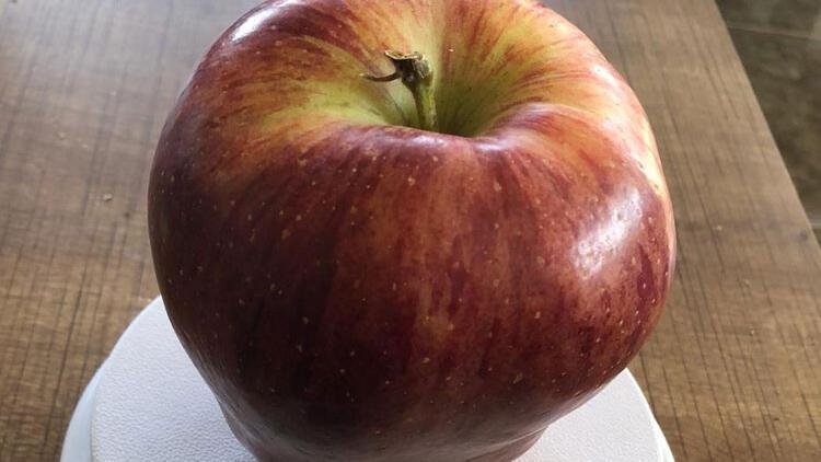 Sıradan bir elma gibi ama gerçeği görenlerin ağzı bir karış açık kaldı!
