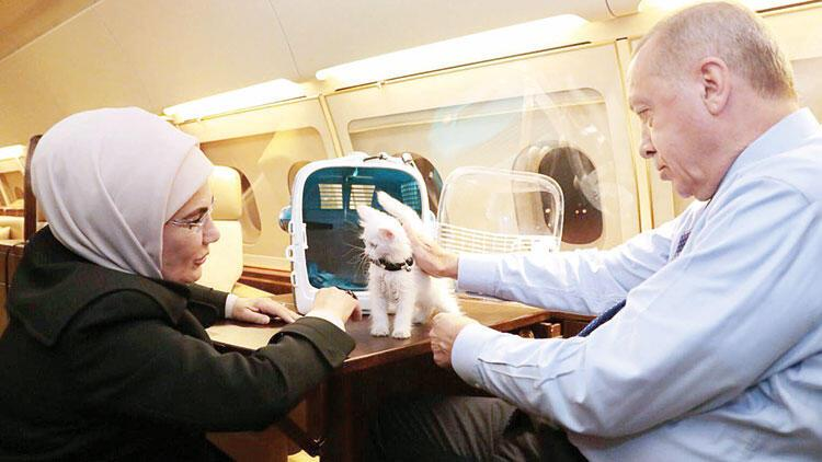 4 Ekim paylaşımı: Ankara kedisi 'Pamuk'