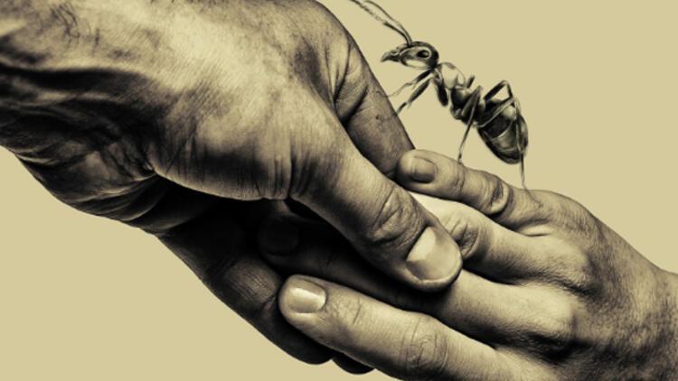 """""""Karınca""""nın prömiyeri Boğaziçi Film Festivali'nde"""