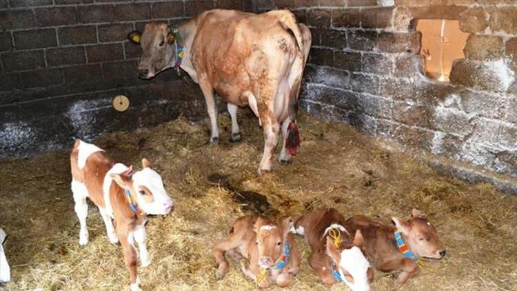"""SETBİR'den """"mutlu"""" hayvancılık için AB projesi"""