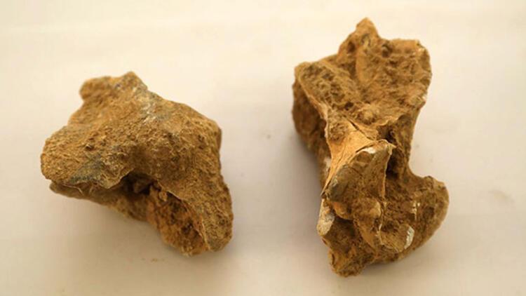 Isparta'da bulundu! 7-8 milyon yıl öncesine ait...