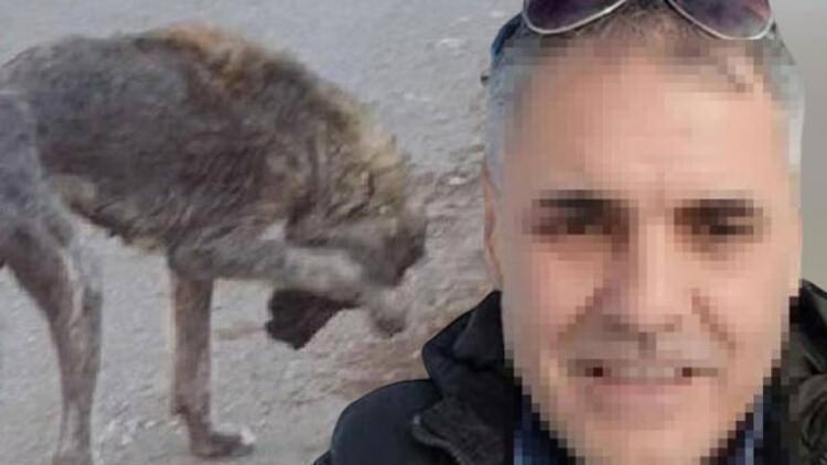 Sokak hayvanlarını öldüreceğini söyleyen belediye çalışanı gözaltına alındı
