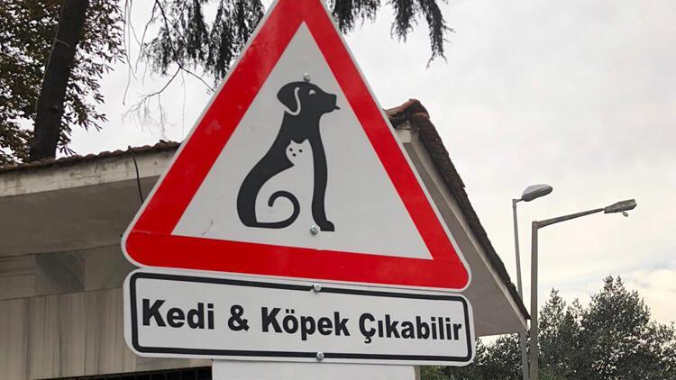 'Kedi&Köpek' çıkabilir