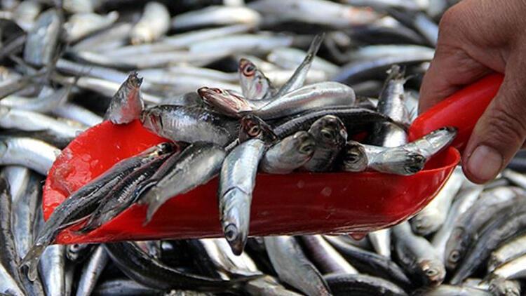 Yeni kanunla kural dışı balıkçılığa set