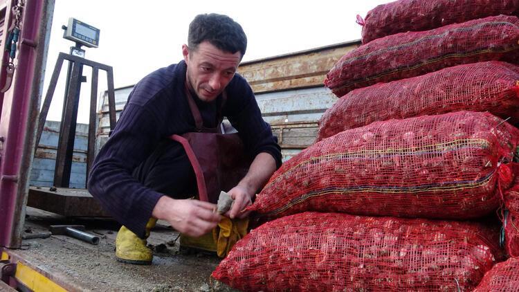 Balıkçıların yeni geliri: Deniz salyangozu