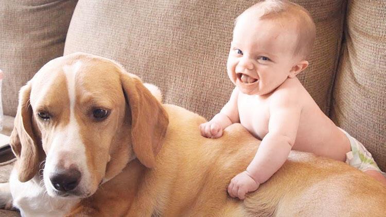 Köpeğin kaç yaşında