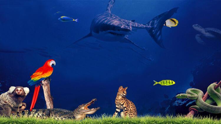 Aqua Vega'da Denizlerin, Okyanusların ve Nehirlerin Derinliklerine Dalın!