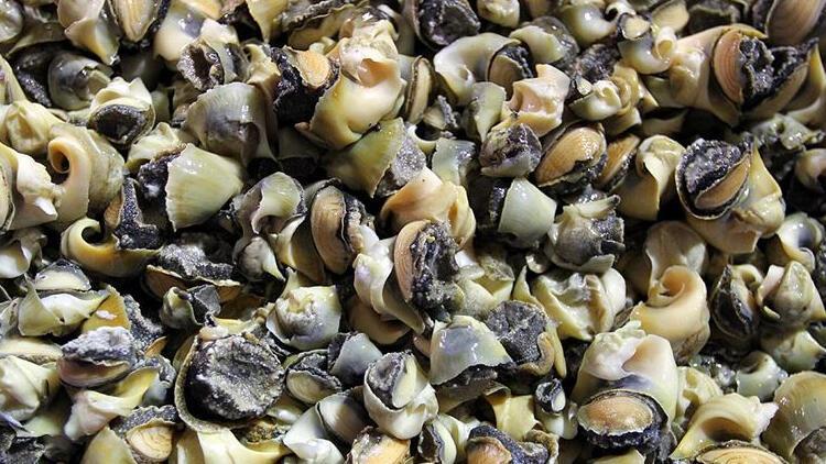 Türkiye deniz salyangozu ihracatını yüzde 20 artırdı