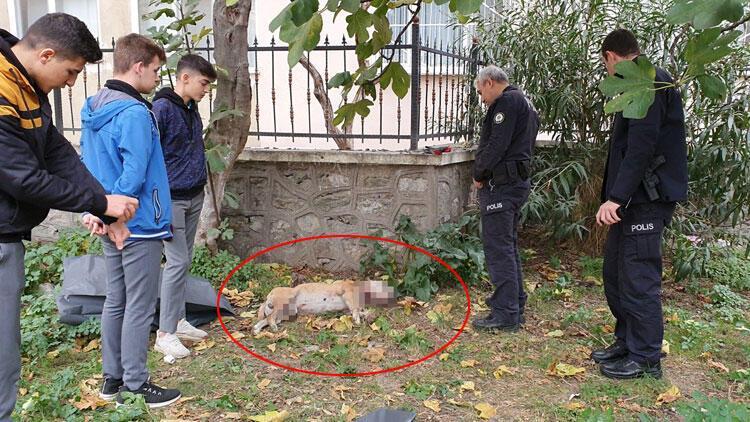 Okul bahçesinde, boğazı kesilmiş köpek ölüsü bulundu