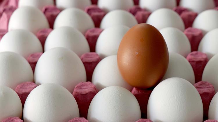 Ordu'da yılda 3 milyon yumurta üretiliyor