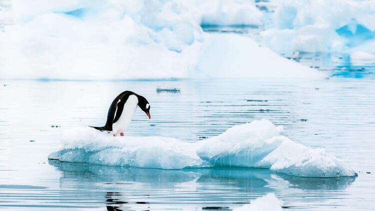 Küresel iklim krizinde sınırı aştık