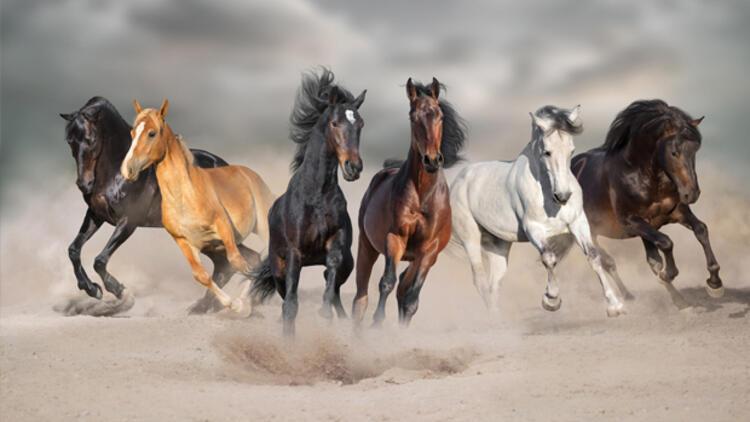 Rüyada at görmek ne anlama gelir? Rüyada beyaz, siyah ve kahverengi at görmenin anlamı