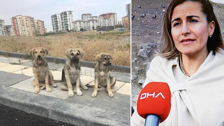 Son dakika haberler: Restoranlardan topluyorlar.. 13 farkı bölgede 200 köpeği besliyorlar