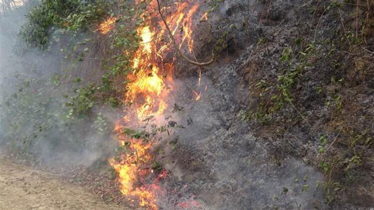 Trabzon'daki örtü yangınlarıyla ilgili 7 kişiye soruşturma