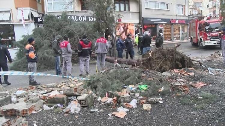 Ümraniye'de fırtına ağaç devirdi