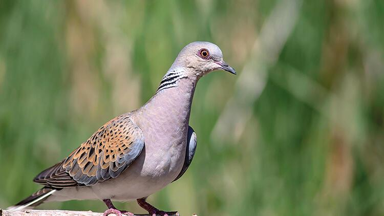 Kuşların doğurganlığına yeni tehdit: Mazot