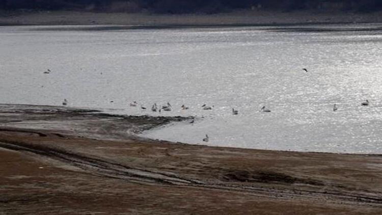 Kısmen kuruyan gölete pelikan akını