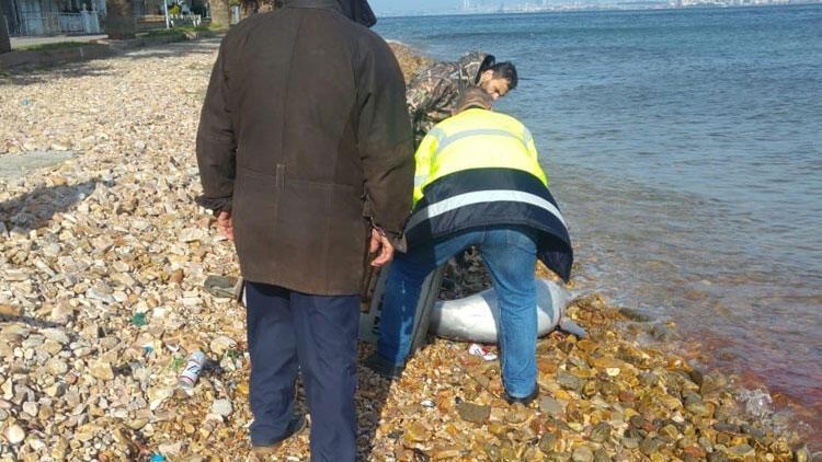 Kınalıada sahilinde yürek burkan görüntü! Kuyruğunu kesmişler...