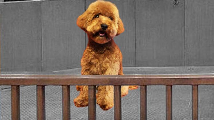 Weasley mahkemelik oldu