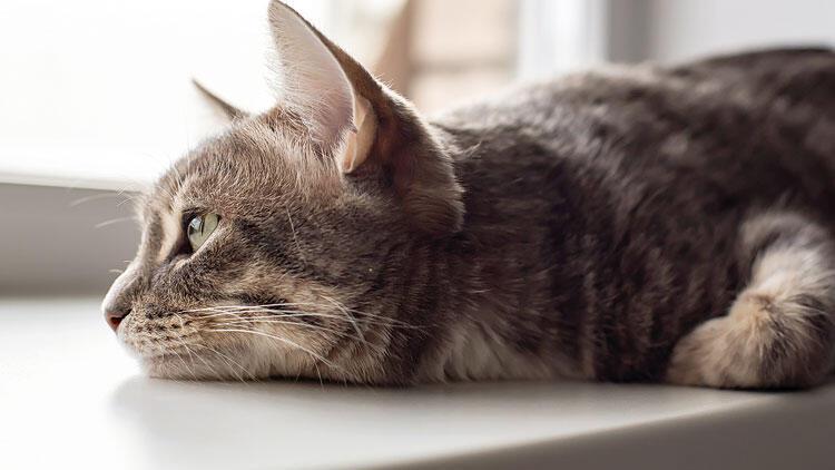 'Hayvanlar Nasıl Yas Tutar?' Bilim, hayvanların duygularını fena halde hafife aldı