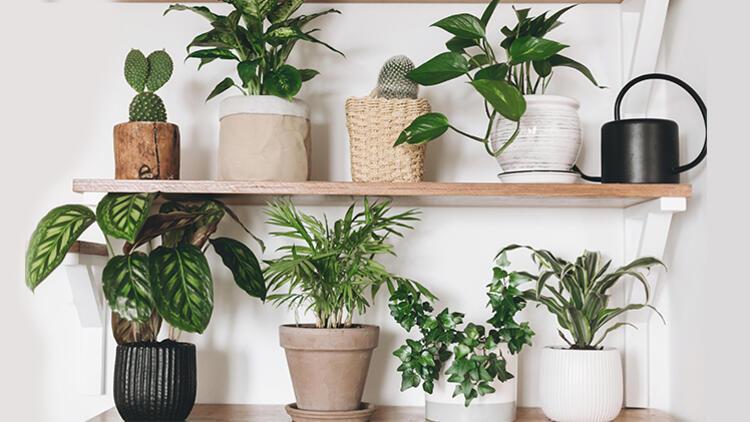 Evinize Alabileceğiniz 5 Bitki ve Faydaları