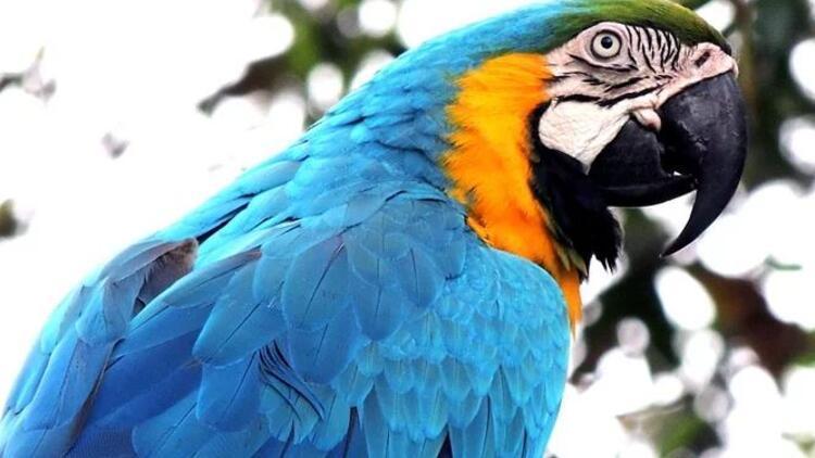 Rüyada papağan görmek ne anlama gelir? - Mahmure
