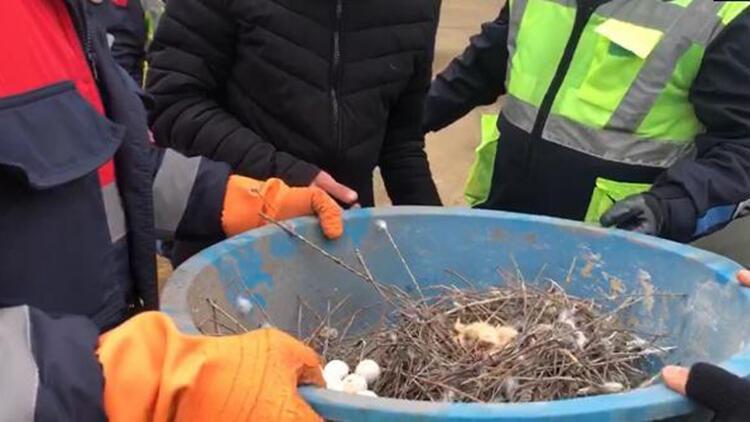 Belediye ekipleri yavru güvercinleri kurtardı