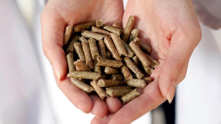 Çeltik sapları elektrik enerjisine dönüştürülebilecek