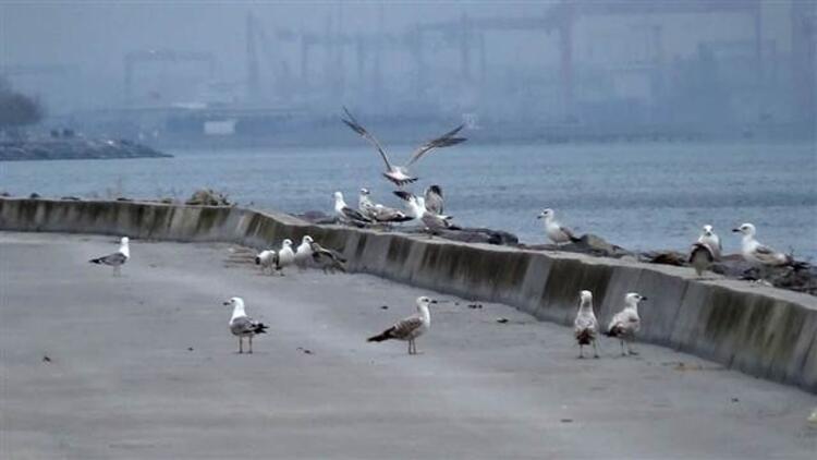 Korona virüs nedeniyle sahiller martılara kaldı