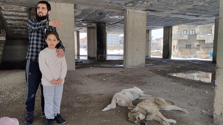 İnşaatın 5'inci kadında mahsur kalan köpekler kurtarıldı
