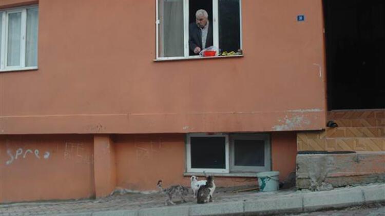 Kendisi dışarı çıkamayınca beslediği kediler gelmeye başladı