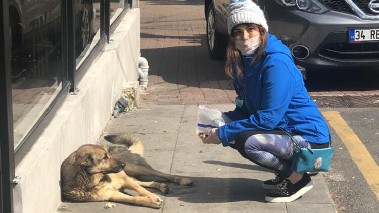 Serap Tibuk sokak hayvanlarını besledi