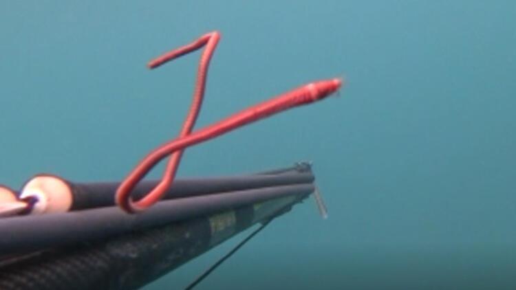 Rekortmen dalgıç Çanakkale'de görüntüledi