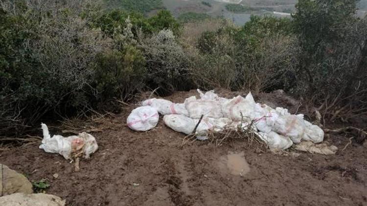 Araziye 400 tavuk ölüsü atan çiftlik sahibine 88 bin lira ceza