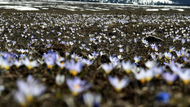 Rengarenk çiçekler ve beyaz örtüyle kaplı ormanlar arasındaki güzellik