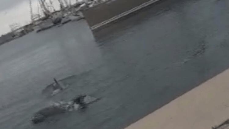 Ataköy Marina'da yunuslar görüntülendi