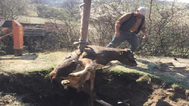 Kütahya'da definecilerin açtığı çukura düşen ineği itfaiye kurtardı