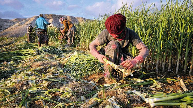 Mevsimlik işçilere korona takibi