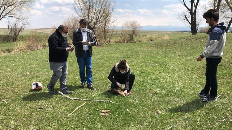 Ermenistan sınırında ölü bulunan şahinlere, mikrobiyolojik inceleme